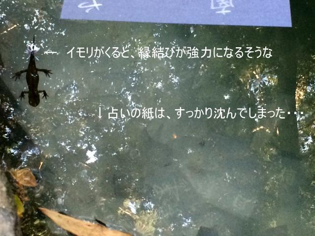 幸運の使者、トカゲと水占い
