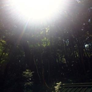 伊勢神宮外宮 木洩れ日がまぶしい