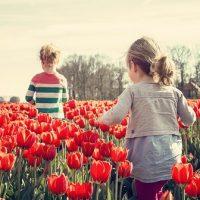 チューリップ畑で遊ぶ子供たち